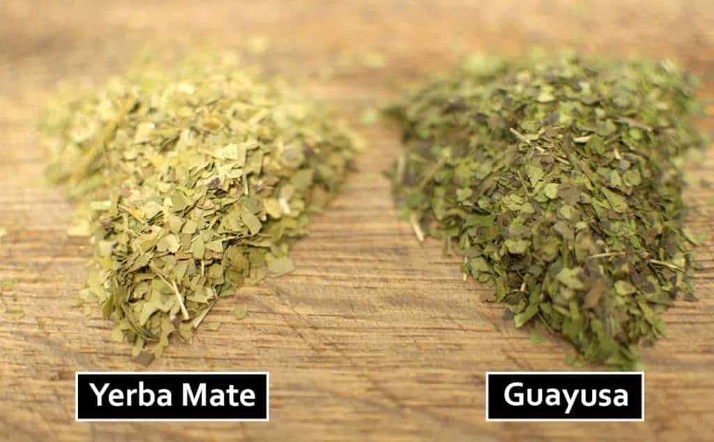 guayusa and yerba mate leaves compared